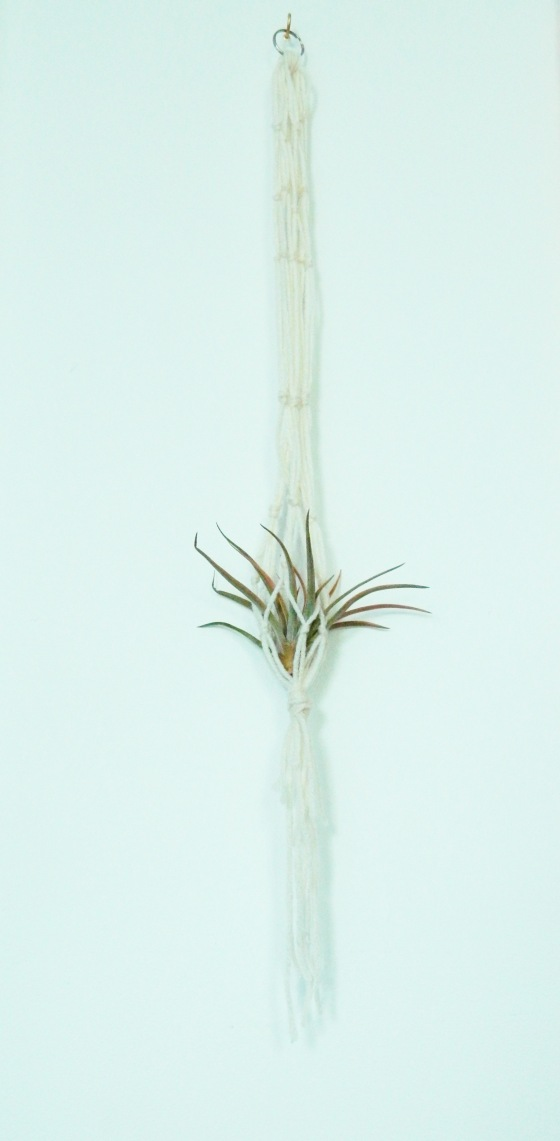 airplant 2