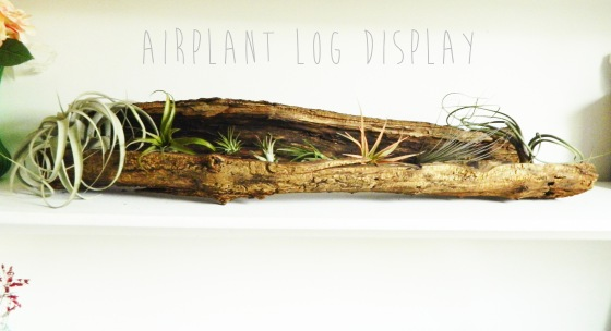 Airplant log